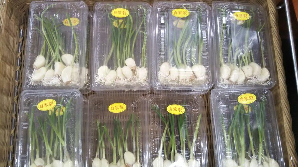 狭山の野菜の直売所のふれあいファームセンターの今月のオススメのお野菜のにんにくスプラウトの画像