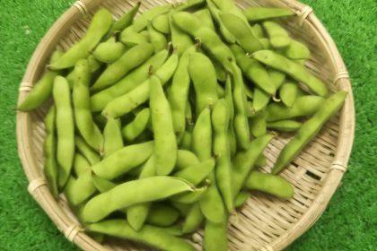 狭山の野菜の直売所のふれあいファームセンターの今月のオススメのお野菜の枝豆の画像