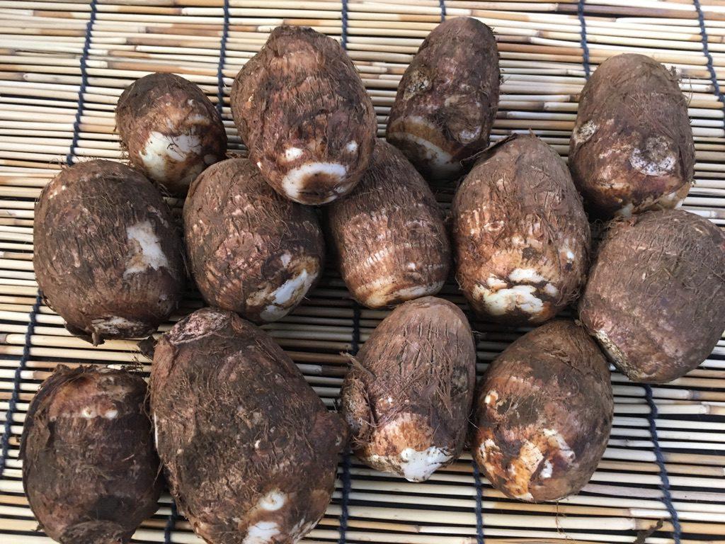 狭山の野菜の直売所のふれあいファームセンターの今月のオススメのお野菜の里芋の画像